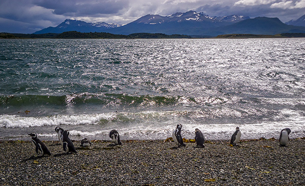 mochilão patagônia - pinguinera ushuaia