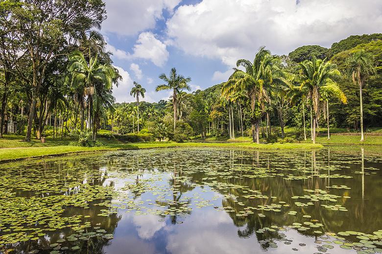pedras jardim botanico:Jardim Botânico de São Paulo – Um oásis na selva de pedra